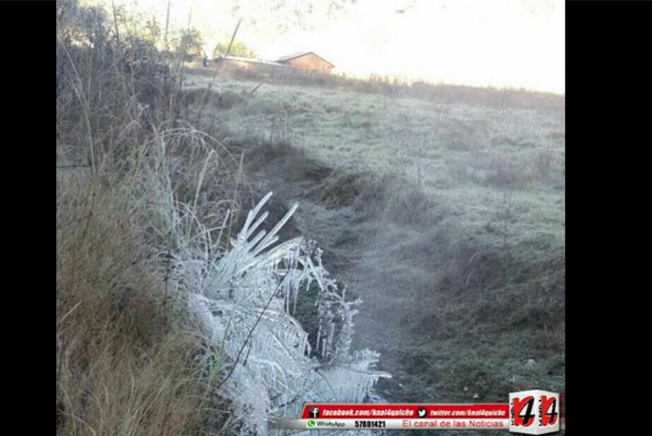 Las bajas temperaturas provocaron escarcha en las siembras. (Foto: Facebook/Knal 4 Quiché)