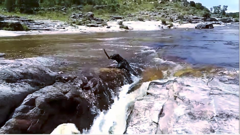 El perro corre para alcanzar la vara que le tiró su dueño y que cae al río. (Captura Youtube)