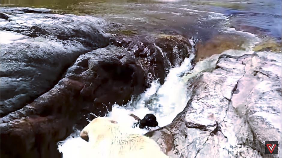 El cachorro resbala y es arrastrado por la corriente. (Captura Youtube)