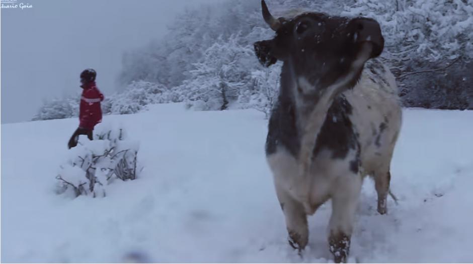 Las vacas son cuidadas con amor en el santuario. (Captura Youtube)