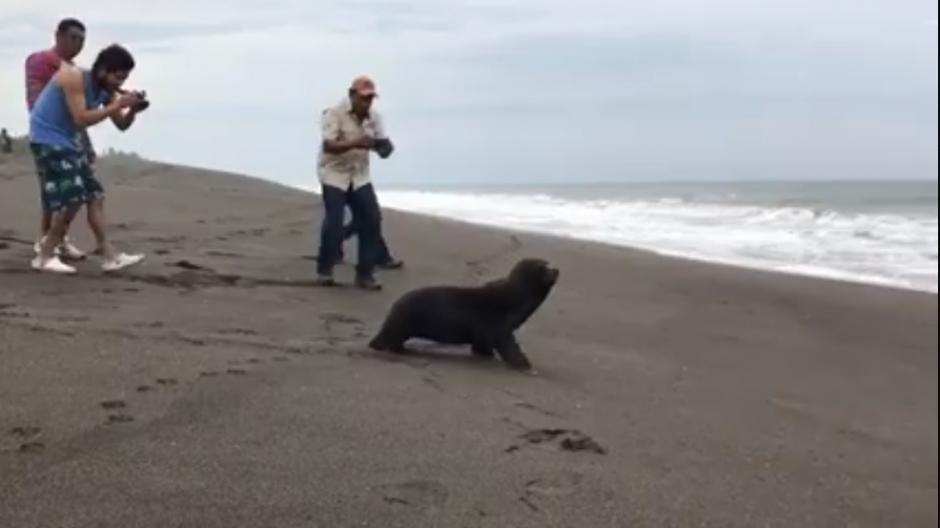 La especie marina regresó a las aguas este martes al mediodía. (Captura Video)
