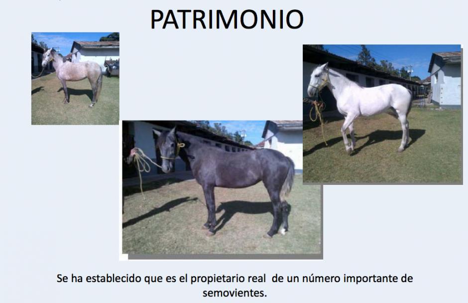 Entre las propiedades de encuentran varios caballos de pura raza. (Foto: CICIG)