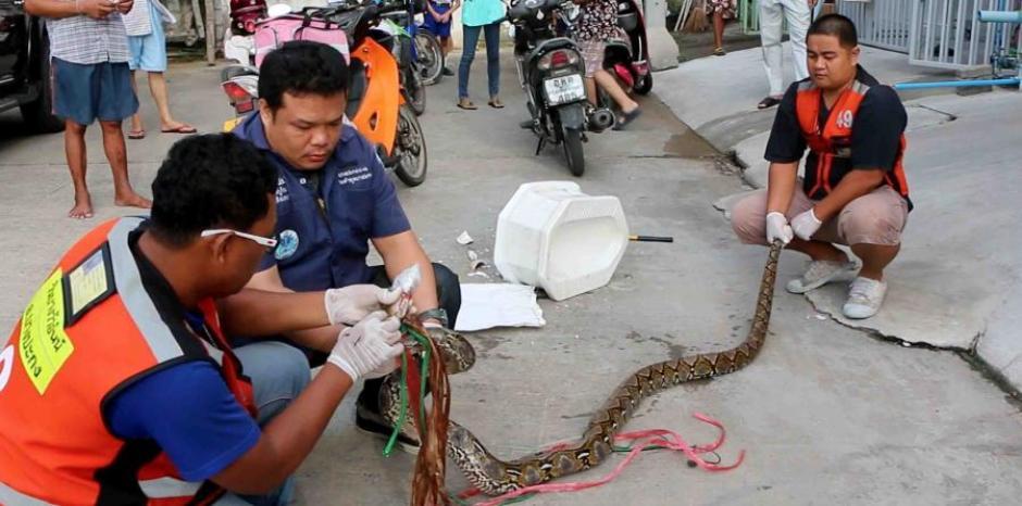 Una pitón de 9 pies atacó a un hombre en Tailandia. (Foto: www.elnuevodia.com)