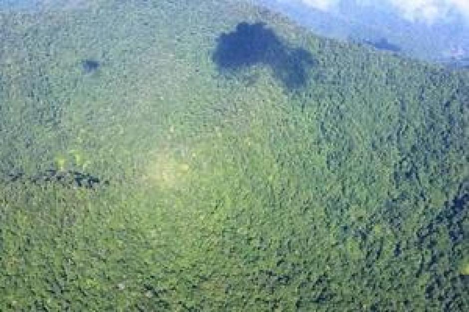 Conap denunció a dos empresas por tala ilegal en la Sierra de las Minas. (Foto: Internet)