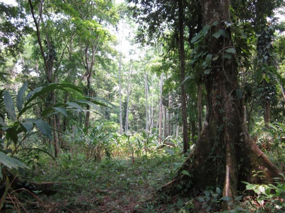 En medio del bosque húmedo de Alta Verapaz, ha sido descubierto este sitio arqueológico que data de la època preclásica.