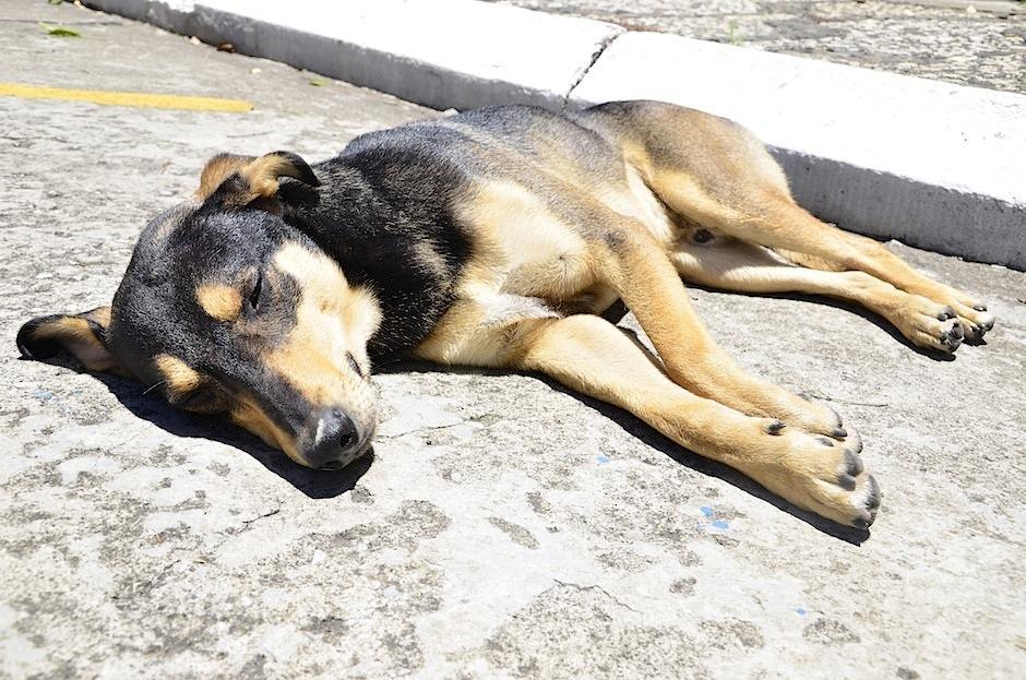 Solovino disfruta un baño de sol. (Foto: Selene Mejía/Soy502)