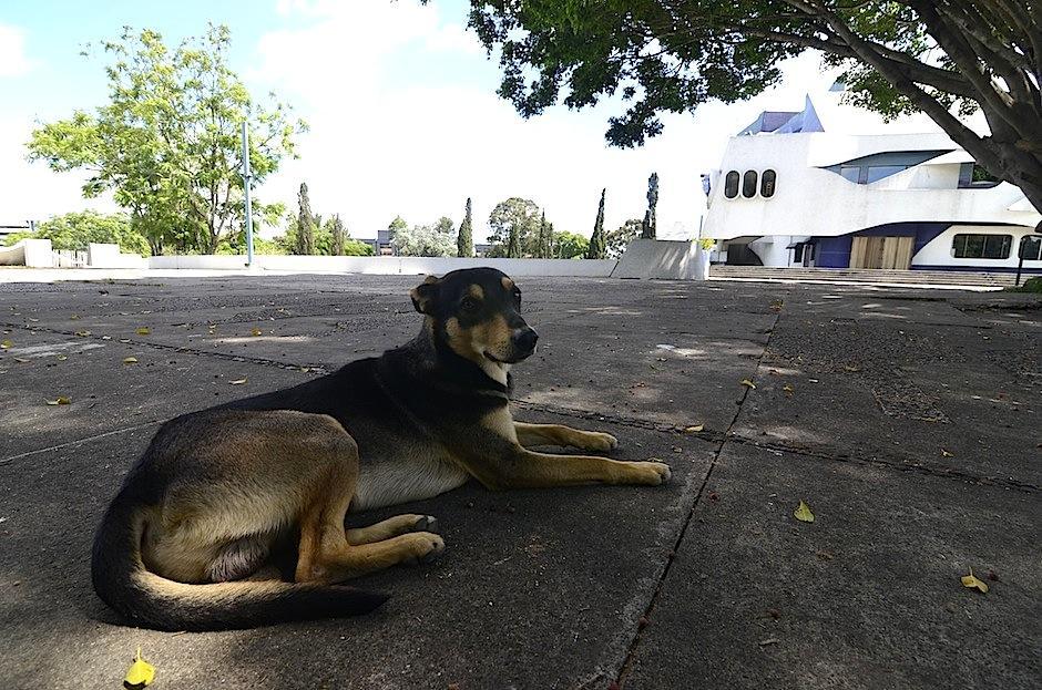 Conoce a Solovino, el perrito adoptado por los empleados del Teatro Nacional. (Foto: Selene Mejía/Soy502)