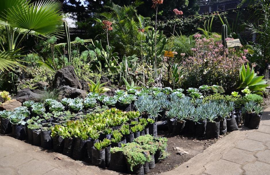 Imagina un jardín lleno de ellas. En Botanik lo puedes apreciar. (Foto: Selene Mejía/Soy502)
