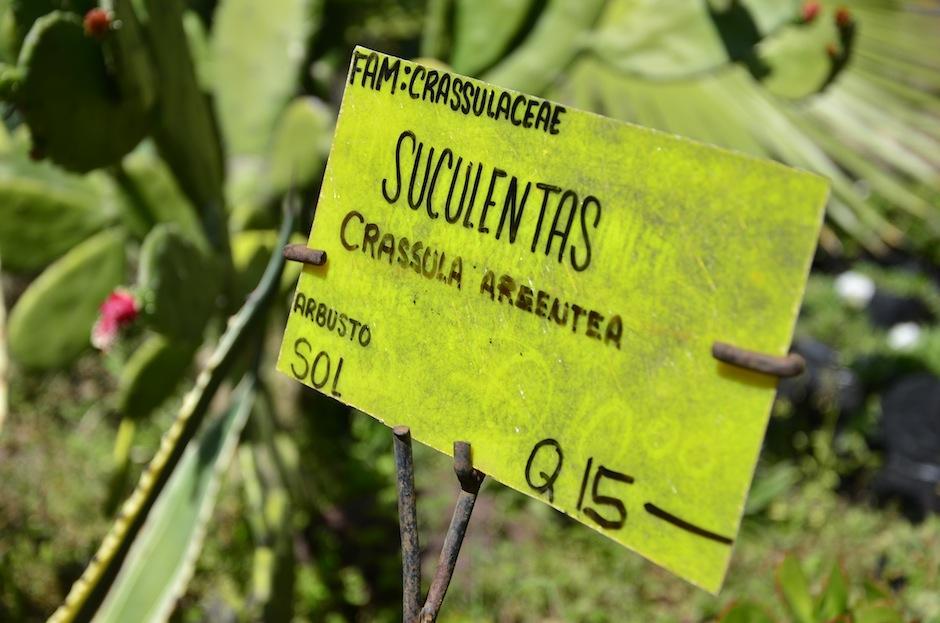 Estas plantas se encuentran muy de moda en el país. (Foto: Selene Mejía/Soy502)