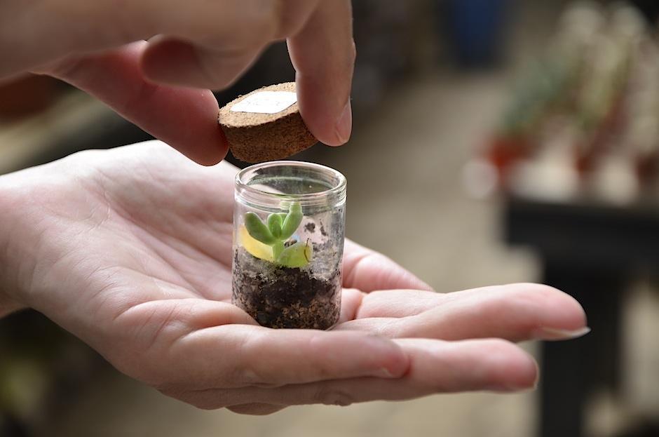 Se pueden aprovechar en distintos frascos. (Foto: Selene Mejía/Soy502)