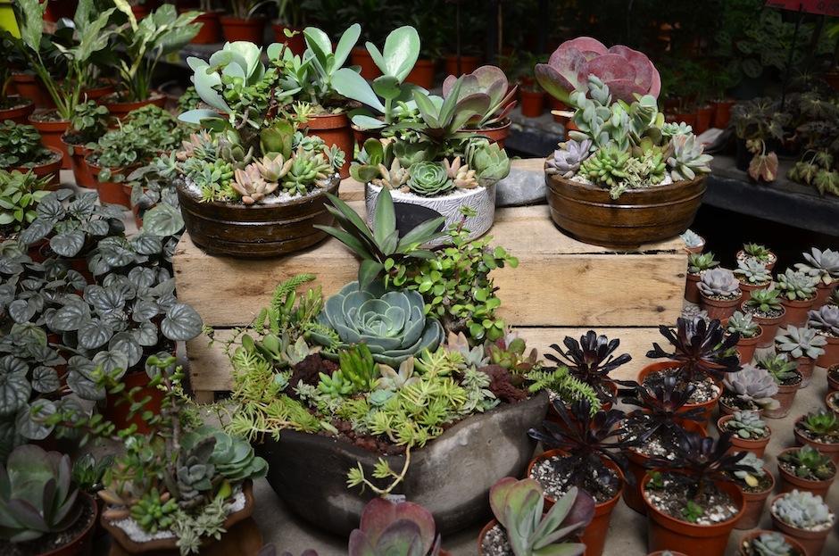 """El mundo de las """"suculentas"""" es fascinante y en Guatemala existen en variedad de formas. (Foto: Selene Mejía/Soy502)"""