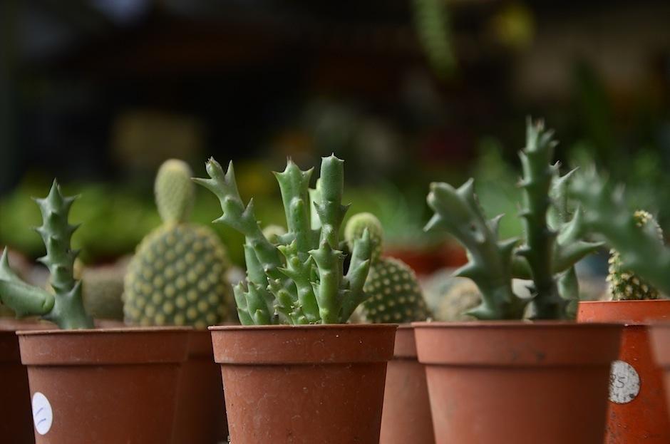 Existen distintos tamaños, formas y colores. (Foto: Selene Mejía/Soy502)