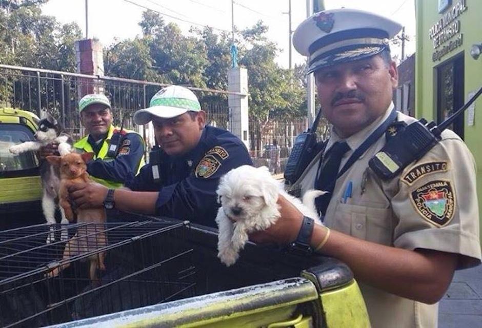 Taquito, junto a 3 perritos más fueron decomisados de comerciantes sin corazón que venden mascotas en Las Charcas, zona 11 de la capital y usan criaderos clandestinos para su reproducción, teniendo a los animales en deplorables condiciones. (Foto: Pasos y Pedales)