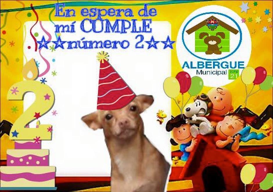 Así se celebró el cumpleaños número 2 de Taquito. (Foto: Albergue Municipal de Mascotas)