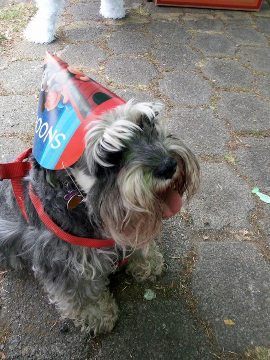 Otros invitados se deleitaron del día, (Foto: Albergue Municipal de Mascotas)