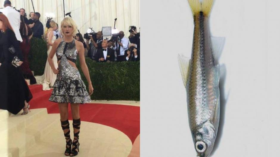 El vestido de Taylor Swift también fue objeto de las burlas. (Foto: tn.com.ar)