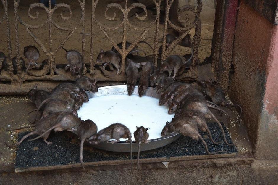 Ellas son la reencarnación de la casta de una deidad. (Foto: eltiempo.com)