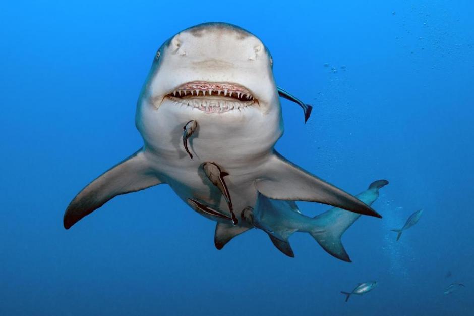 El tiburón se pasea por las aguas de la ciudad de Juniper, en Florida, Estados Unidos. (Foto: The Sun)