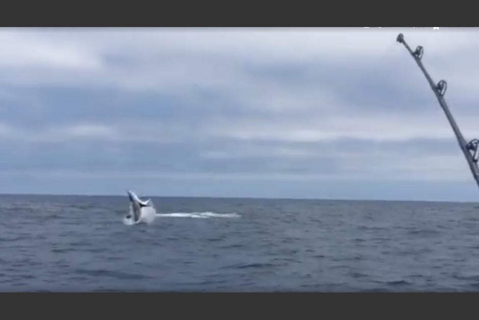 Un grupo de pescadores fue sorprendido por este tiburón. (Imagen: Captura de pantalla)
