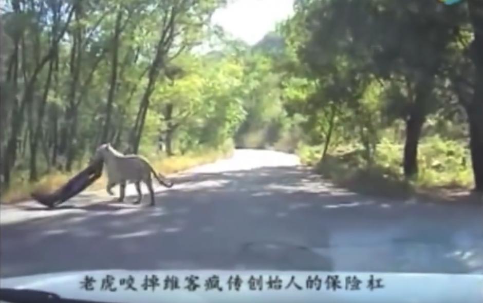 El animal se lleva el trofeo. (Captura de pantalla: WorldHottestNews/YouTube)