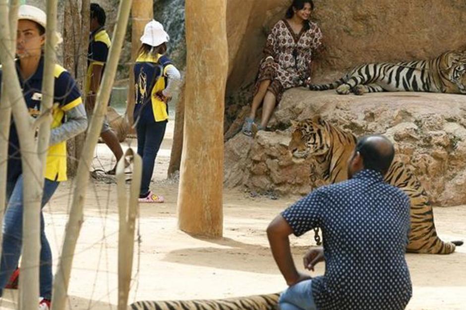 Las autoridades de Tailandia continuaron hoy por segundo día con el rescate de 137 felinos. (Foto: EFE)