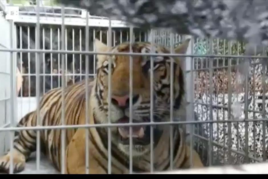El templo es juzgado por supuesto tráfico de animales. (Foto: EFE)