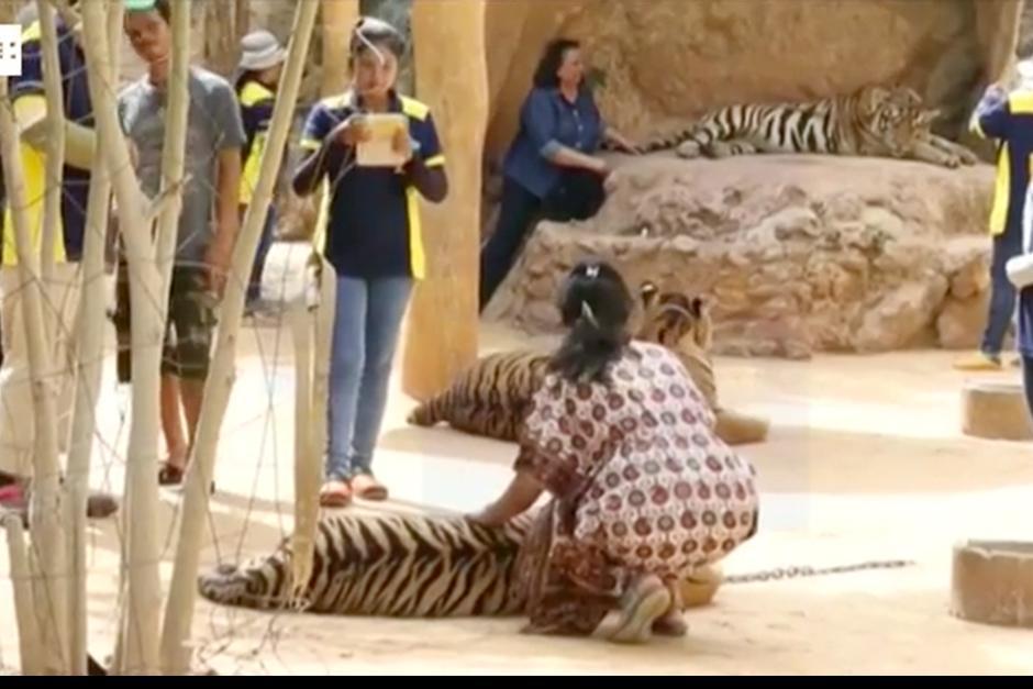 El templo, es un reclamo para turistas que se paseaban y se hacían fotos con los felinos. (Foto: EFE)