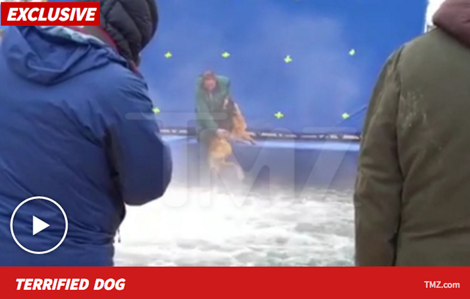 Peta y otras organizaciones animalistas pelean por este caso de maltrato. (Foto: