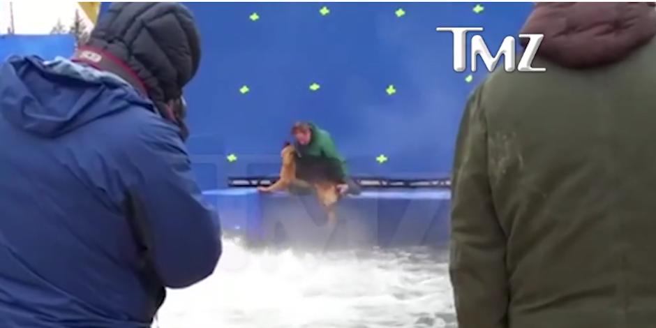 """Uno de los perros que actúan en """"A Dogs Purpuse"""" fue obligado a realizar una peligrosa escena. (Foto: TMZ)"""