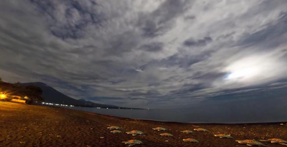 La vida marina también colapsa al equivocar la luz eléctrica con la luz solar. (Foto: Youtube)