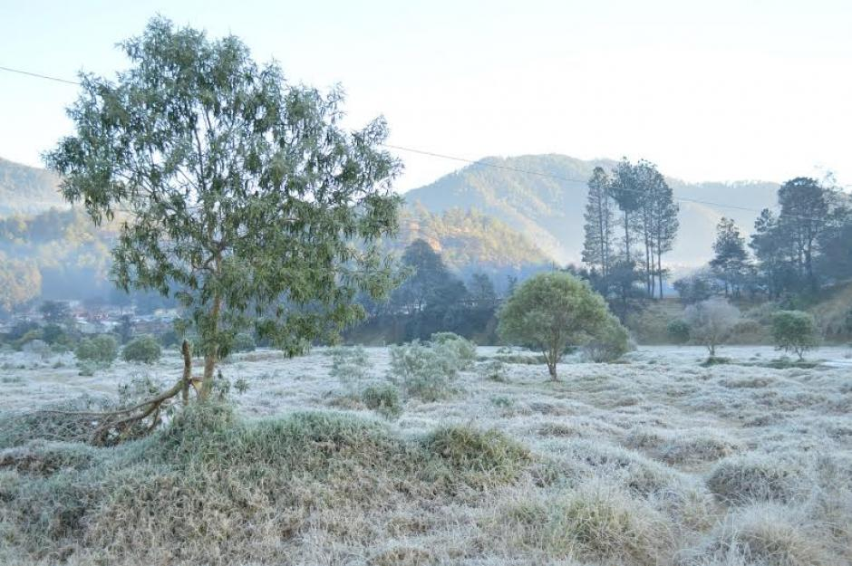 En Totonicapán las temperaturas provocaron escarcha en los terrenos. (Foto: José García/NuestroDiario)