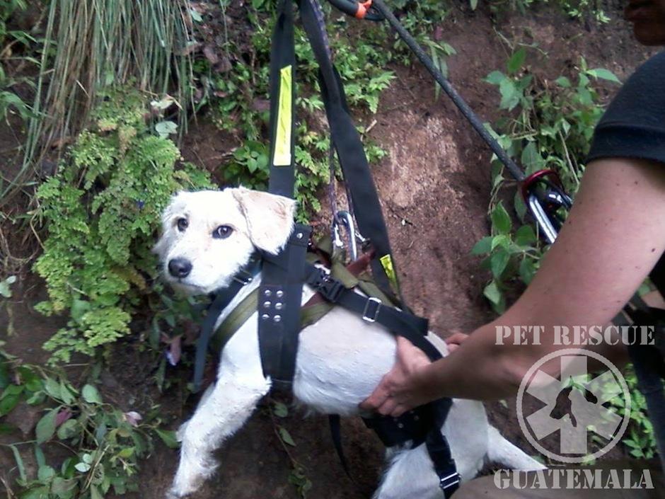 Toto, perrito rescatado de un barranco por Pet Rescue Guatemala. (Foto: Pet Rescue Guatemala oficial)