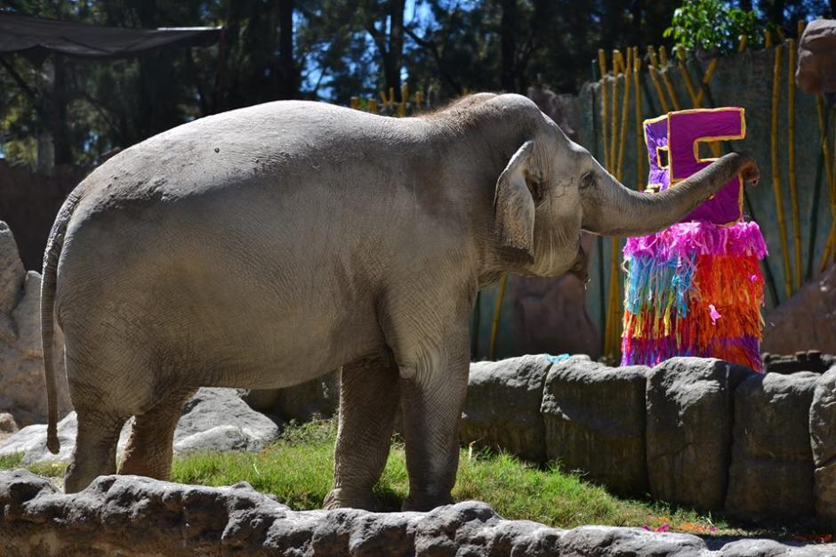Es una de las atracciones del zoológico La Aurora en la zona 13. (Foto: Wilder López/Soy502)