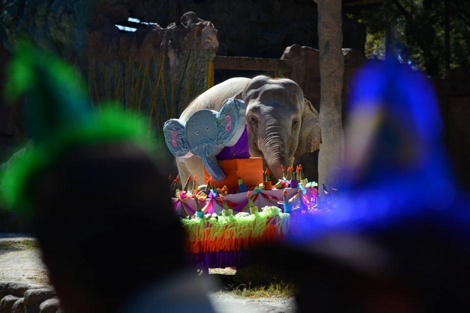 Varios visitantes en el zoológico le cantaron a la paquidermo. (Foto: Wilder López/Soy502)