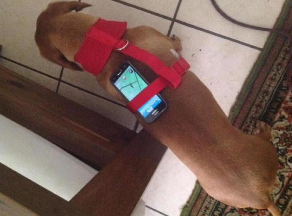 Si tu perro es activo puede ayudarte a sumar kilómetros. (Foto: Gizmodo)
