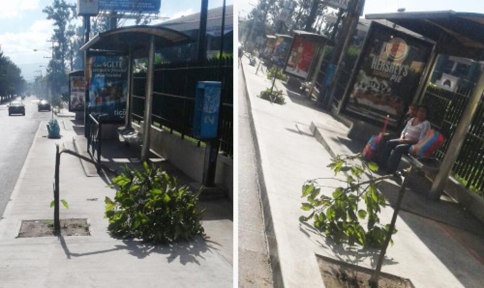 En los sitios donde hay vallas de pared también son puntos rojos para la jardinización. (Foto: Municipalidad de Guatemala)