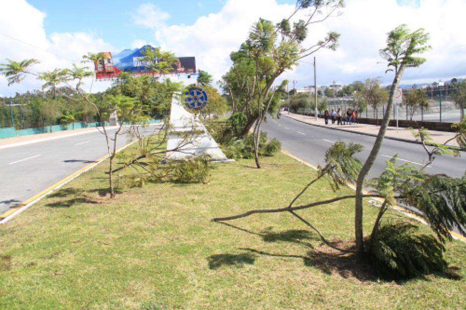 En otros sectores, la muni reporta el robo de plantas y flores. (Foto: Municipalidad de Guatemala)
