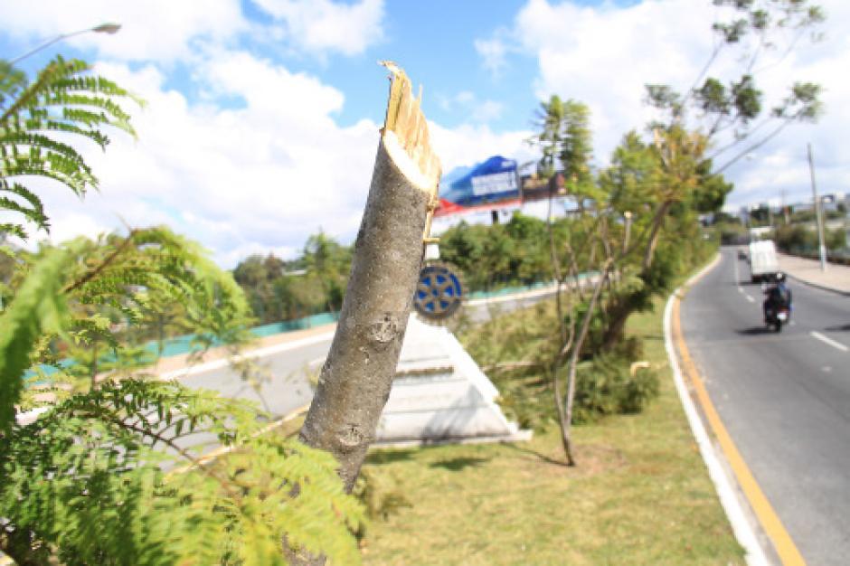 Varios árboles fueron destruidos en los últimos días en la ciudad. (Foto: Municipalidad de Guatemala)