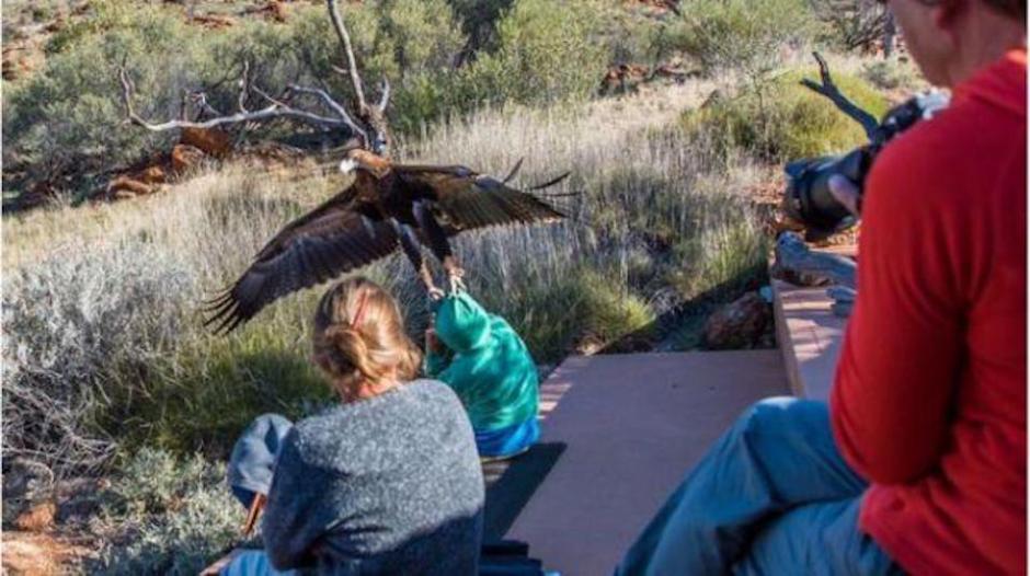 Un águila intentó llevarse a un menor entre seis y ocho años que se encontraba en un espectáculo de vida silvestre. (Foto: Instagram, Christine O'Connelly)