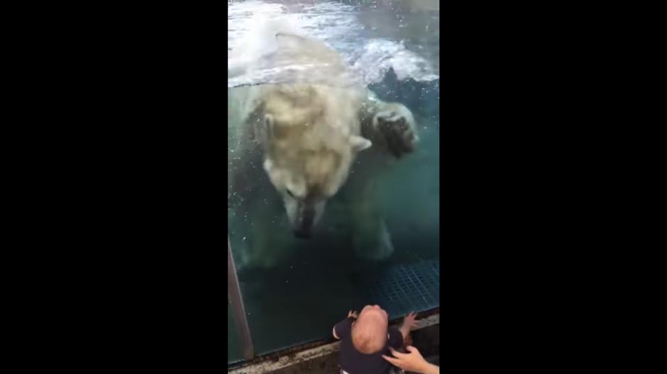 El oso estuvo jugando en el agua después de intentar atacar al bebé. (Foto: Tomado de YouTube)