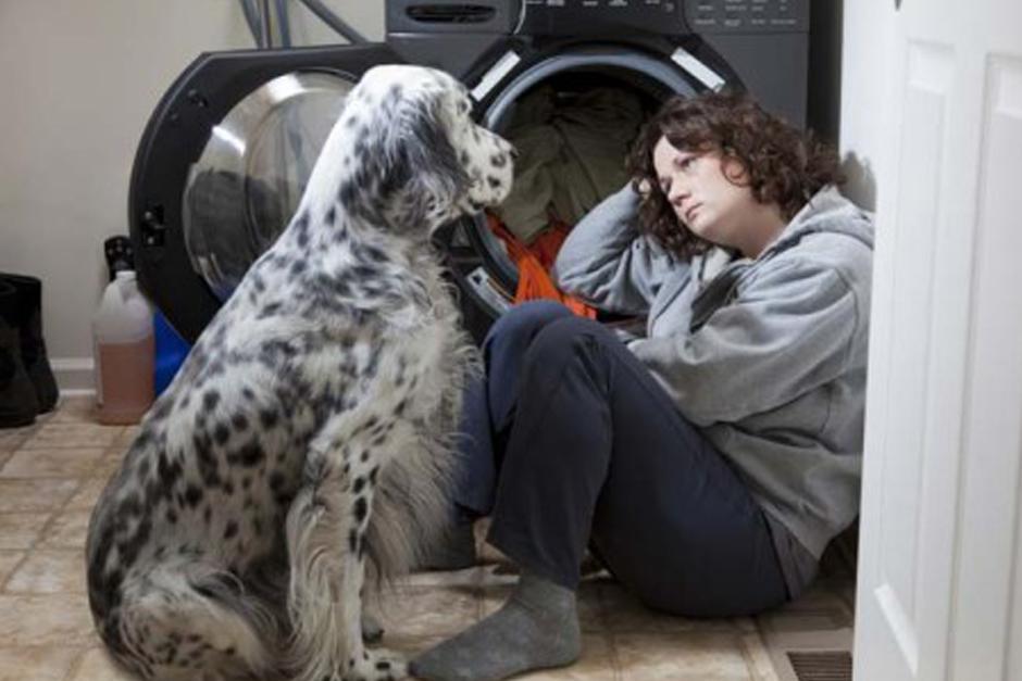 Las mascotas sufren violencia doméstica en más de la mitad de los casos de violencia intrafamiliar