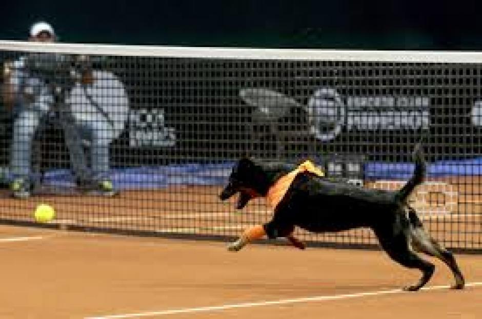 Veloces y felices estuvieron los canes en el juego de exhibición. (Foto: Televisa)