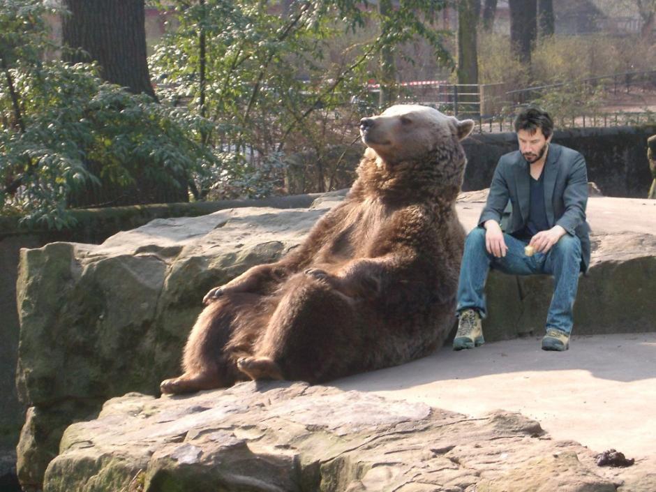 El oso tiene compañía. (Foto: reddit.com)