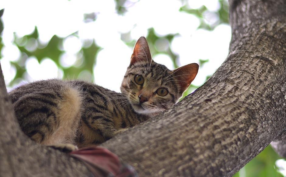 Un gato saludable es un gato feliz. (Foto: Wilder López/Soy502)