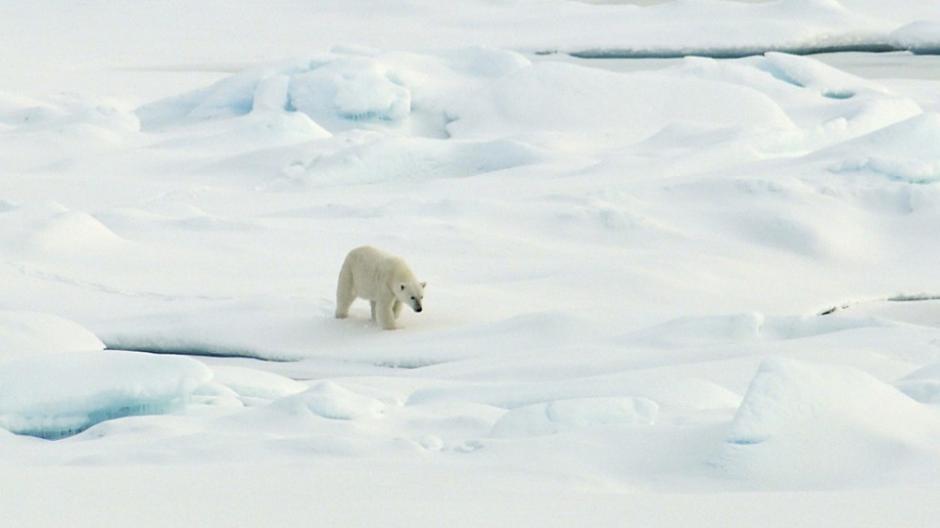 Greenpeace lleva años luchando por detener la perforación de pozos petroleros en el Ártico, en beneficio de los osos polares. (Foto: veoverde.com)