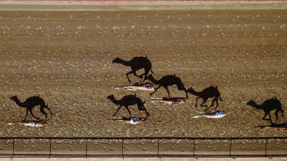 Una postal de la carrera anual de camellos en la pista Al Marmoum, Dubai. Este es uno de los eventos mas importantes de la región. (Foto: Shoayb/dronestagram)