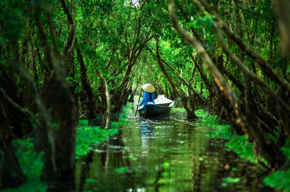 Una mujer cruza sigilosamente entre los senderos húmedos del bosque Tra Su.(Foto: Réhahn)