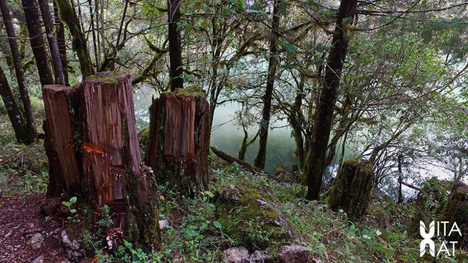 La tala de árboles es otra de las causas por las que la laguna se ha descuidado. (Foto: Facebook, Vitanat)