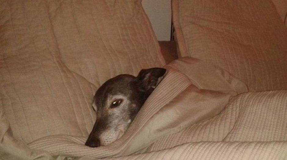 Walnut es un lindo perrito mayor que tiene problemas de salud. (Foto: Mark Woods)