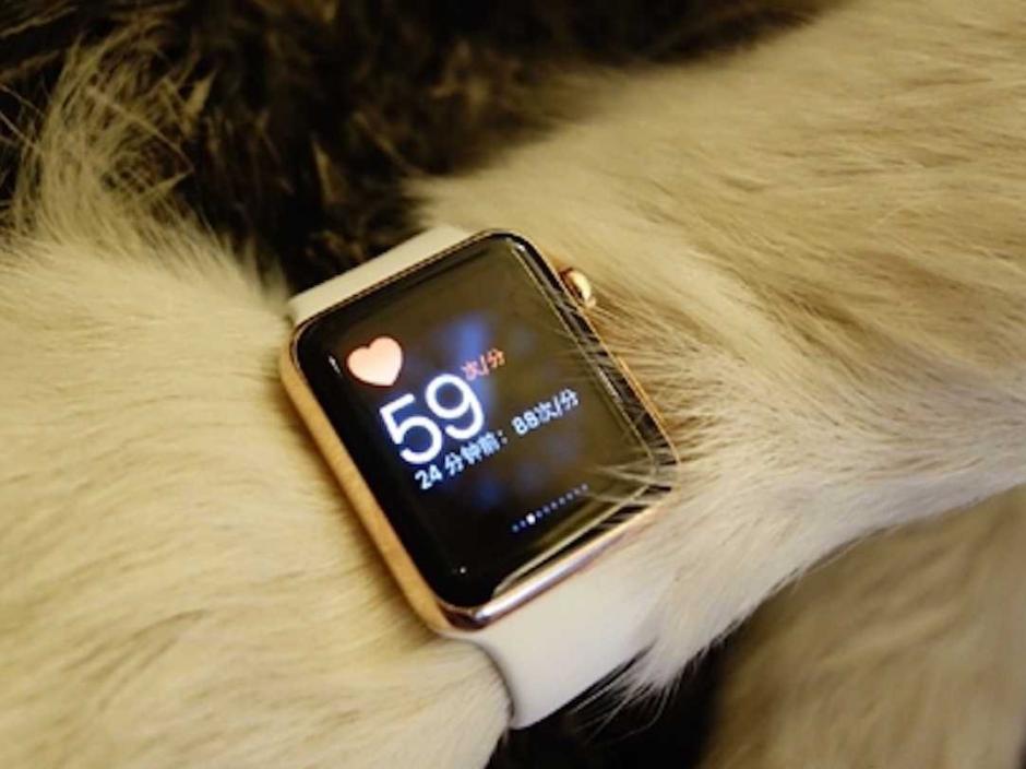 Sería el primer perro que te daría la hora. (Foto: Infobae)
